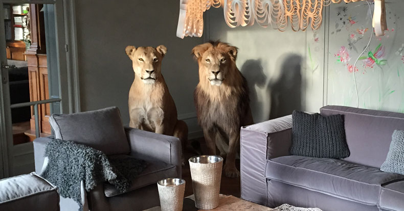 The interior design by taxidermy
